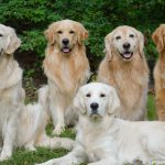 Dogs-for-Rob-1-e1434850228704